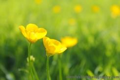 Garden_Spring_2016(3)_edited_sm