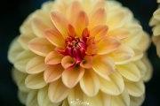 5E5A5929_edited_LR
